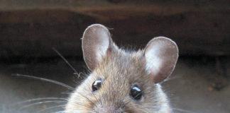 CNOP partorisce il topolino, e neppure riesce a chiamarlo per nome.